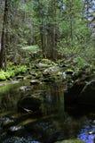 森林溪 库存图片