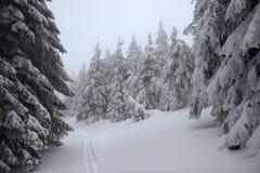 森林滑雪跟踪冬天 免版税图库摄影