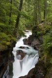 森林瀑布 图库摄影
