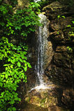 森林瀑布 免版税库存图片