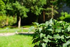 森林灌木夏天温暖的天气 库存图片