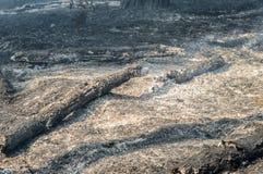 森林火灾在夏天 库存图片