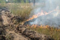 森林火灾在夏天 免版税库存照片