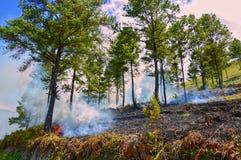 森林火灾在多巴湖,印度尼西亚 免版税库存图片