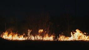 森林火灾在晚上,关闭燃烧的矮树丛,干草 股票录像