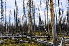 森林火灾残余黄石 库存图片