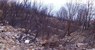 森林火灾烧毁的森林 股票录像