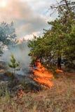 森林火灾燃烧,野火接近在天时间 免版税库存照片