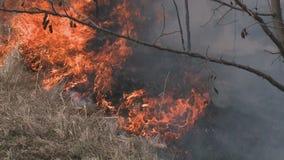 森林火灾的危险-烟和火 股票录像