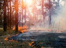 森林火灾的发展 火焰开始树干损伤  库存照片