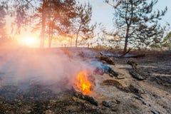 森林火灾的发展 火焰开始树干损伤 免版税图库摄影