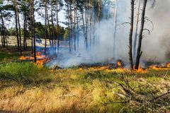 森林火灾的发展 火焰开始树干损伤 库存图片