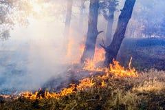 森林火灾的发展 火焰开始树干树 图库摄影