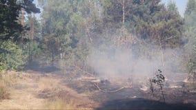 森林火灾,烟,烧了树、植被和地面 风打旋烟 影视素材