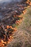 森林火灾,草烧伤关闭  免版税库存照片