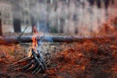 森林火灾 下落的树被烧成灰烬很多烟,当vildfire 文本的空间 免版税库存照片