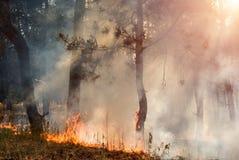森林火灾 在野火、污染和很多烟以后的被烧的树 图库摄影