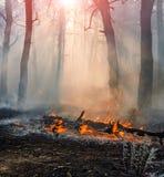 森林火灾 在野火、污染和很多烟以后的被烧的树 库存照片