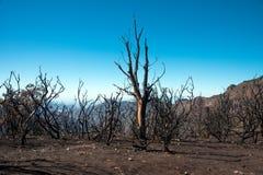 森林火灾 库存图片