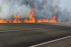 森林火灾 免版税图库摄影