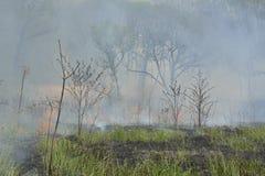 森林火灾18 库存照片