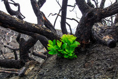 森林火灾 免版税库存照片