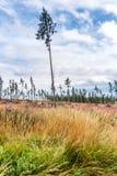 森林灾难在高Tatras国家公园,斯洛伐克 图库摄影