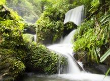 森林热带瀑布 免版税库存照片