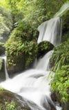 森林热带瀑布 图库摄影
