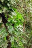 森林爱树木的人 免版税库存照片