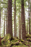 森林特写镜头 图库摄影