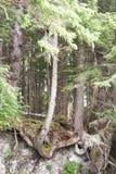 森林特写镜头 库存图片