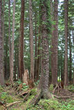 森林特写镜头 免版税库存照片