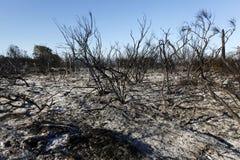 森林狂放在火以后 免版税图库摄影