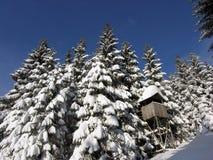 森林狩猎小屋冬天 免版税库存照片