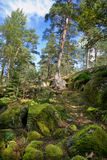 森林瑞典 免版税库存照片