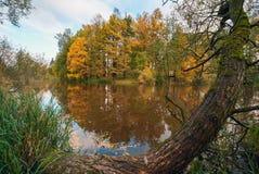 森林由河的秋天树 图库摄影