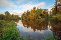 森林由河的秋天树 库存图片