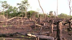 森林由深砍烧光并且烧 股票录像