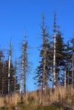 森林病残 库存照片