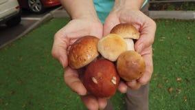 森林白色蘑菇在手上 股票视频