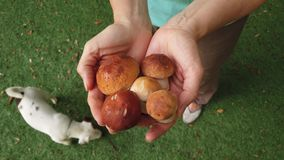 森林白色蘑菇在手上 影视素材