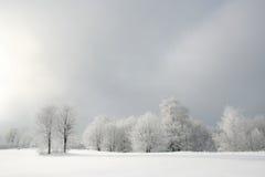 森林白色 库存照片