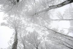 森林白色 免版税库存图片