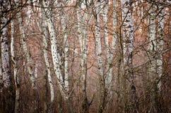 森林白色 库存图片
