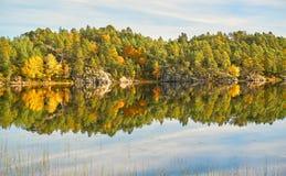 森林的一个五颜六色的看法在秋天 免版税库存图片