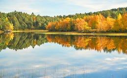 森林的一个五颜六色的看法在秋天 图库摄影