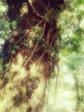 森林的不可思议和神秘的背景 免版税库存照片