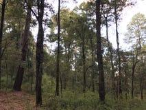 森林的中部,有很多树 免版税图库摄影