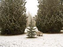 从森林的公园一棵小树守卫入口。 免版税库存图片